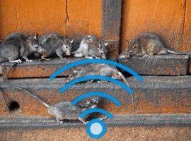 Ультразвуковой отпугиватель грызунов: как работает, как выбрать