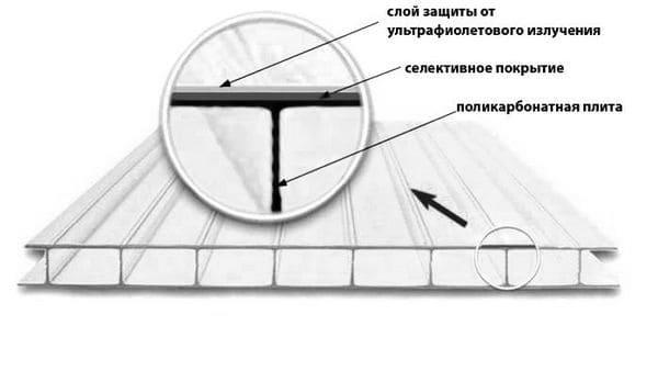 Выбор поликарбоната для теплицы
